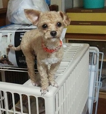 f:id:dog_life_saving:20151212192831j:image