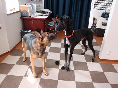 f:id:dog_life_saving:20151216101157j:image
