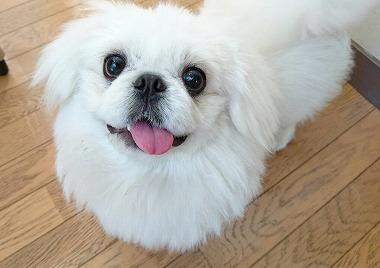 f:id:dog_life_saving:20160209160758j:image