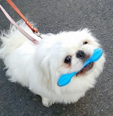 f:id:dog_life_saving:20160209160800j:image
