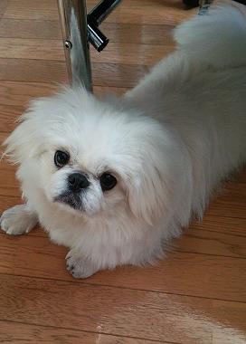 f:id:dog_life_saving:20160209160801j:image