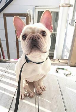 f:id:dog_life_saving:20160218131646j:image