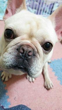 f:id:dog_life_saving:20160218131648j:image