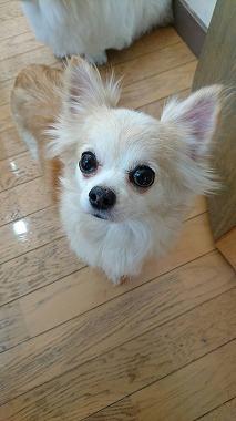 f:id:dog_life_saving:20160226141847j:image