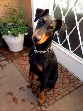 f:id:dog_life_saving:20160311125651j:image