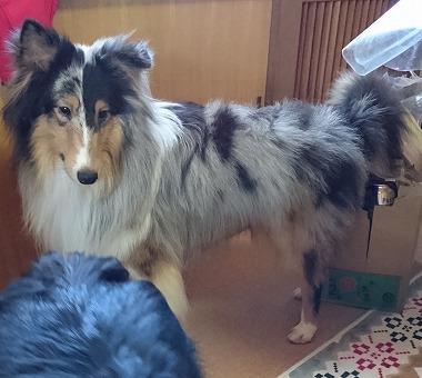 f:id:dog_life_saving:20160314080634j:image
