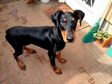 f:id:dog_life_saving:20160331140650j:image