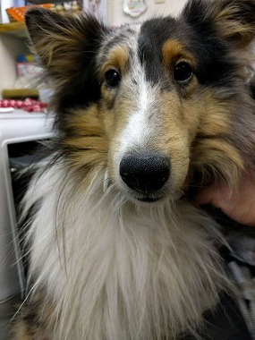 f:id:dog_life_saving:20160331141420j:image