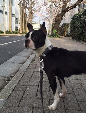 f:id:dog_life_saving:20160404133856j:image