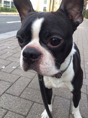 f:id:dog_life_saving:20160404133857j:image