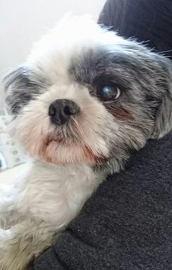 f:id:dog_life_saving:20160505102416j:image