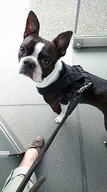 f:id:dog_life_saving:20160505102458j:image