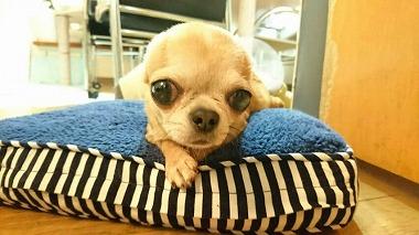 f:id:dog_life_saving:20160505102554j:image