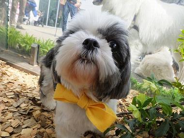 f:id:dog_life_saving:20160505102916j:image