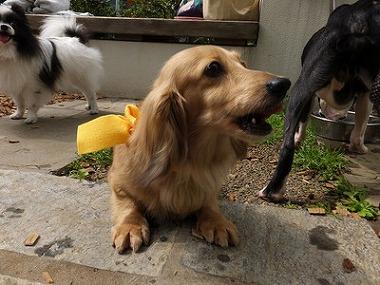 f:id:dog_life_saving:20160505102919j:image