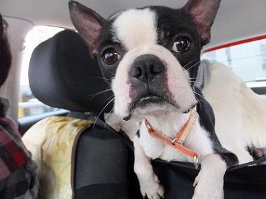 f:id:dog_life_saving:20160505102920j:image