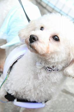 f:id:dog_life_saving:20160505103044j:image
