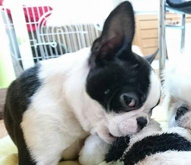 f:id:dog_life_saving:20160505155318j:image
