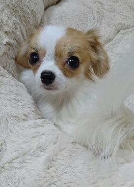 f:id:dog_life_saving:20160616145859j:image