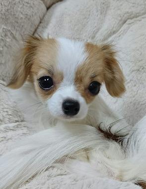 f:id:dog_life_saving:20160616145900j:image