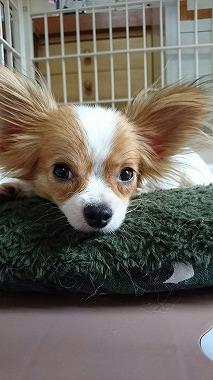 f:id:dog_life_saving:20160616145901j:image
