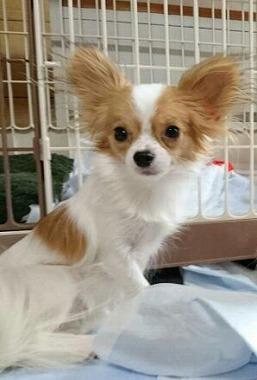 f:id:dog_life_saving:20160616145902j:image