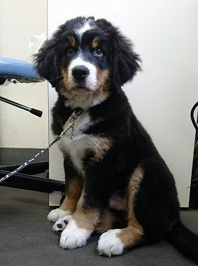 f:id:dog_life_saving:20160619142214j:image