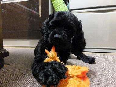 f:id:dog_life_saving:20160706143605j:image