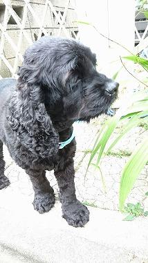 f:id:dog_life_saving:20160706143607j:image