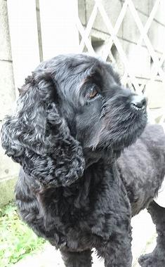 f:id:dog_life_saving:20160706143608j:image