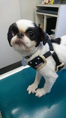 f:id:dog_life_saving:20160809150634j:image