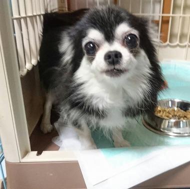 f:id:dog_life_saving:20160914132718j:image