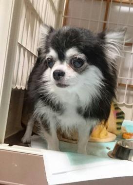 f:id:dog_life_saving:20160914132720j:image