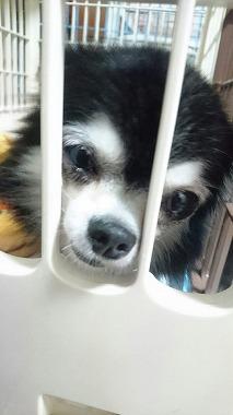 f:id:dog_life_saving:20160914132721j:image