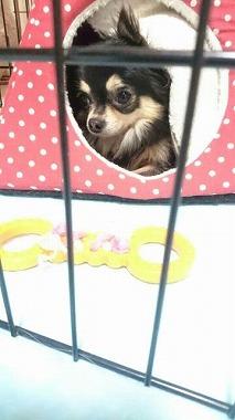 f:id:dog_life_saving:20160914134739j:image