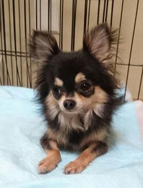 f:id:dog_life_saving:20160914134741j:image