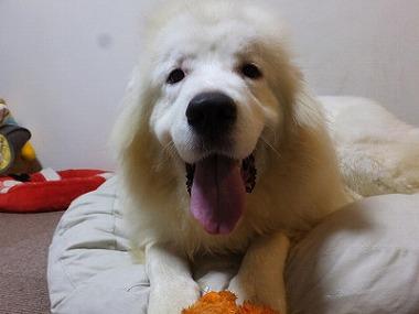 f:id:dog_life_saving:20161004150709j:image