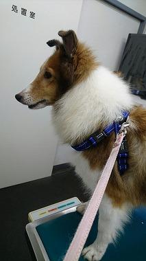 f:id:dog_life_saving:20161107140820j:image