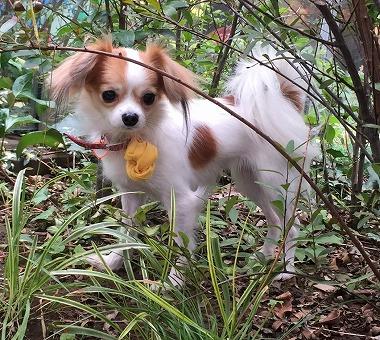 f:id:dog_life_saving:20161107140839j:image