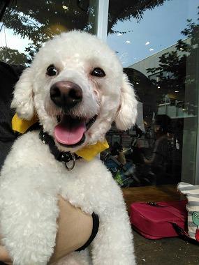 f:id:dog_life_saving:20161107141342j:image