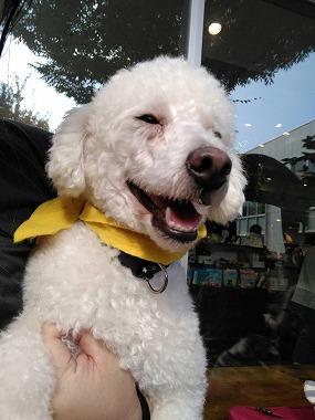f:id:dog_life_saving:20161107141343j:image
