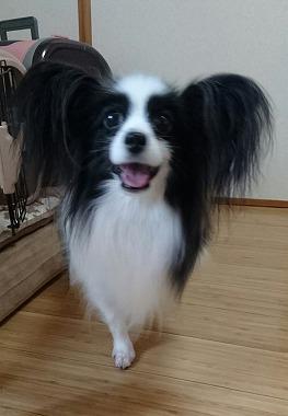 f:id:dog_life_saving:20161115135412j:image