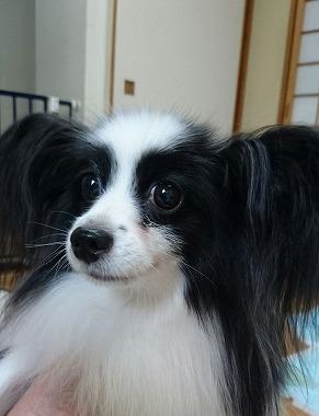 f:id:dog_life_saving:20161115135413j:image