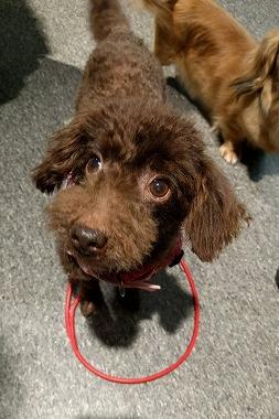 f:id:dog_life_saving:20161127110726j:image