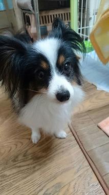 f:id:dog_life_saving:20170111100547j:image
