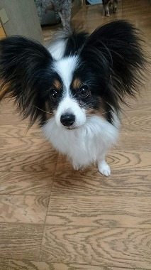 f:id:dog_life_saving:20170111100548j:image