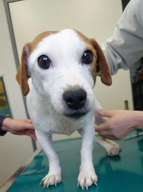 f:id:dog_life_saving:20170131133051j:image