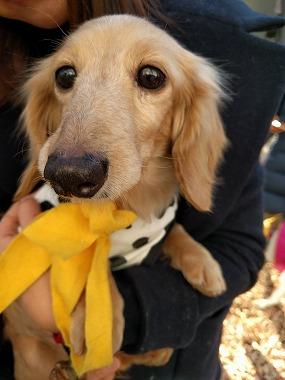 f:id:dog_life_saving:20170131133056j:image
