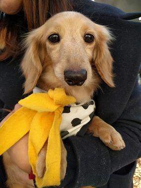 f:id:dog_life_saving:20170131133057j:image