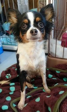 f:id:dog_life_saving:20170131133102j:image